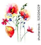 red poppies flowers  watercolor ...   Shutterstock . vector #525204229