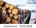 pile of wood logs. wood logs... | Shutterstock . vector #525213028