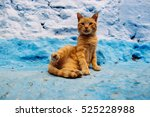 chefchaouen cat   the blue city ... | Shutterstock . vector #525228988