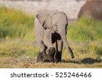 Stock photo african elephant baby loxodonta africana etosha national park namibia 525246466