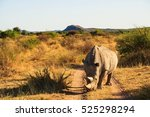 rhinoceros namibia | Shutterstock . vector #525298294