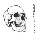 anatomic skull vector art.... | Shutterstock .eps vector #525344740