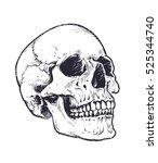 anatomic skull vector art.... | Shutterstock .eps vector #525344740