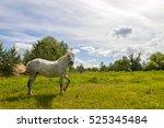 Beautiful  White Horse On...