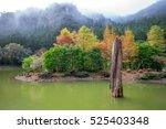 mingchi forest recreation area... | Shutterstock . vector #525403348