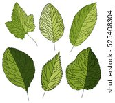 set of green structural leaves | Shutterstock .eps vector #525408304