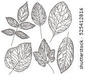 vector set of detailed leaves | Shutterstock .eps vector #525412816