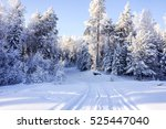 Winter Road In Winter Forest