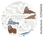 polar animals. vector circle... | Shutterstock .eps vector #525566026