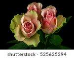 close up of bouquet pastel... | Shutterstock . vector #525625294