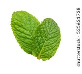 two fresh mint leaves isolated... | Shutterstock . vector #525631738