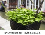 Lover Growing In Flower Pot