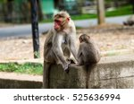 Common Monkey Kid  Bonnet...