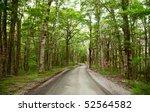 Dirt road through rainforest at New Zealand - stock photo