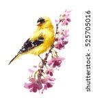 Watercolor Bird American...