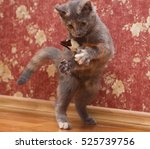Stock photo  cat playing with toy mouse 525739756