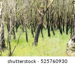 Landscape After The Fire In A...