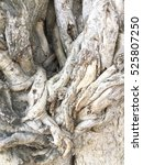 Banyan Tree Roots Background