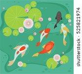 carp pond vector illustration... | Shutterstock .eps vector #525821974