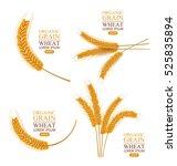 ears of wheat. vector... | Shutterstock .eps vector #525835894