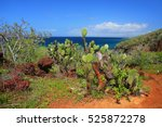 Galapagos Prickly Pear On...