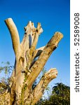 rebirth of nature   cut down... | Shutterstock . vector #52589008