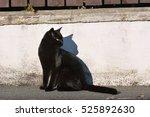 Stock photo black cat on the street 525892630