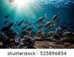 underwater fish in sunrays | Shutterstock . vector #525896854