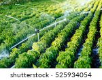 Irrigation System In Function...
