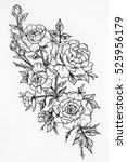 black and white sketch of the... | Shutterstock . vector #525956179