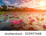 Dawn On The Lake With Lotuses....