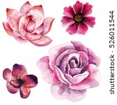 watercolor pink flowers... | Shutterstock . vector #526011544