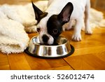 The French Bulldog Puppy Eatin...