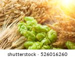 green hops  malt  ears of... | Shutterstock . vector #526016260