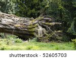 Small photo of disproved tree