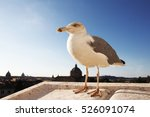 Fat Seagull On The Roof Lookin...