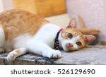 Cute Neighbor Cat On Concrete...