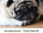Pug Dog Is So Cute Feeling...