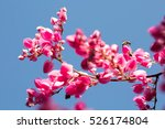 group of pink pwgchompo and ...   Shutterstock . vector #526174804