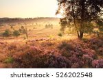 bright golden sunrise over... | Shutterstock . vector #526202548