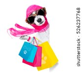 Stock photo crazy and silly terrier dog diva lady with shopping bag isolated on white background behind 526237768