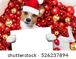 Jack Russell Terrier  Dog With...