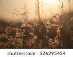 grass and senset | Shutterstock . vector #526295434