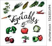 tomato  fennel  corn  cabbage ... | Shutterstock .eps vector #526301494