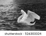 Open Wings Swan