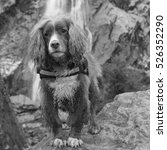 Dog In Front Of Waterfall In...