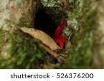 leaf inside the hole of tree | Shutterstock . vector #526376200