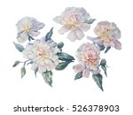 white peonies watercolor... | Shutterstock . vector #526378903