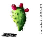 Opuntia Prickly Pear Fruit...