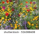 wild flower mix with poppies | Shutterstock . vector #526388608